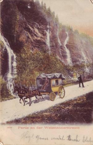 weisstannen 1904