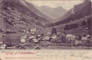 weisstannen 1906