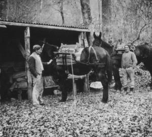 9alpeel transport muli emmeli (2)